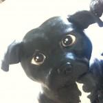 3D-figurkake hund