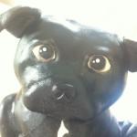 3D figurkake hund